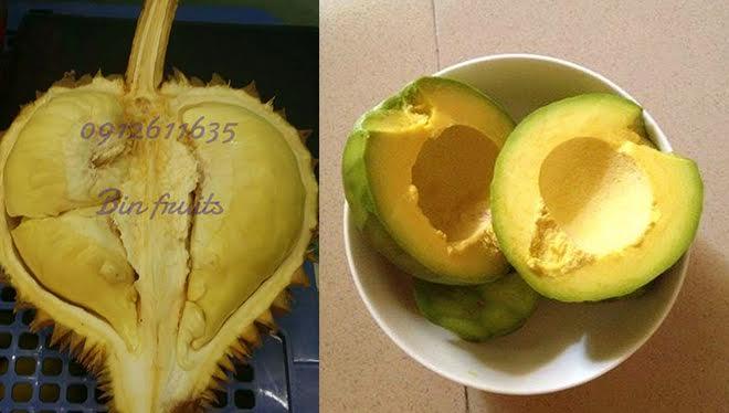 bin-fruits-2