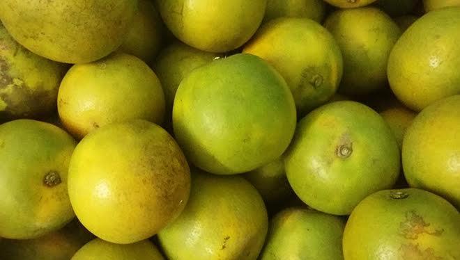 bin-fruits-3