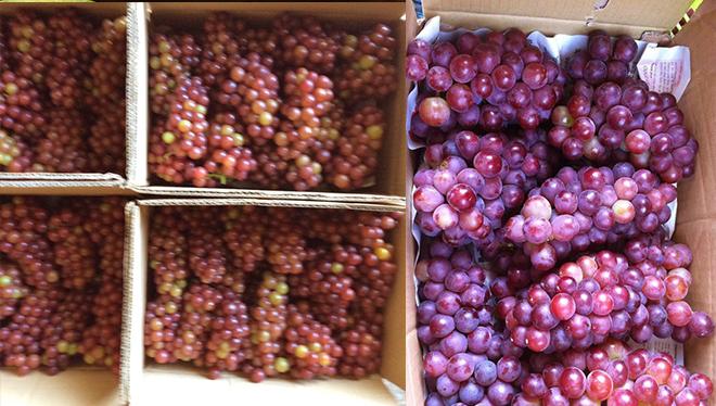 bin-fruits-4