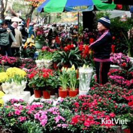 Tìm NGUỒN HÀNG kinh doanh hoa tươi dịp lễ Tết liệu có KHÓ?