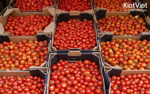 Quản lý chất lượng hàng hoá nông sản